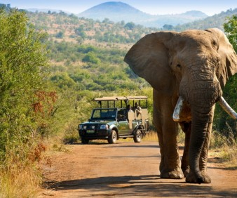 Safari and cultural tours to South Africa