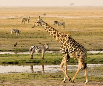 South Africa cultural Safari tours