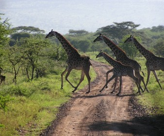 South Africa customized cultural tours and Safari