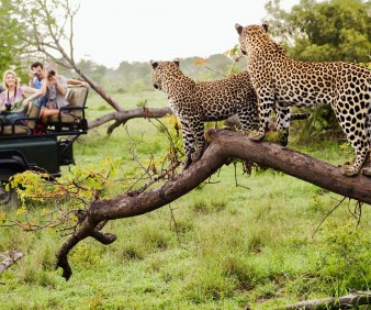 South Africa customized luxury tours