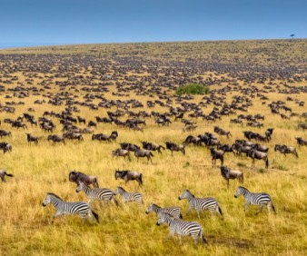 Tanzania camping tours and Safari