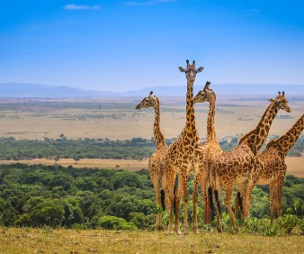 Wildlife viewing in Kenya and Tanzania