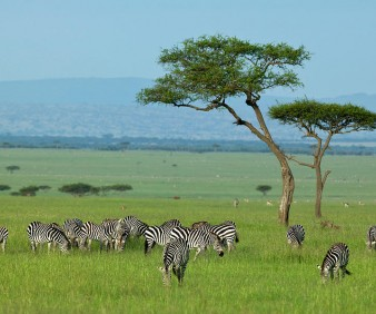Tanzania and Kenya National Parks tours
