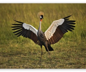 Birding tours and wild life viewing in Zambia