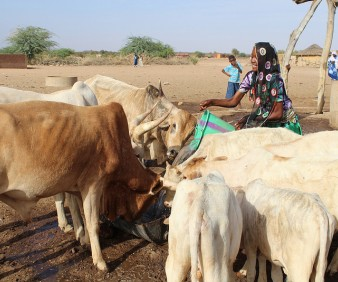 customized agriculture tours to Mauritania