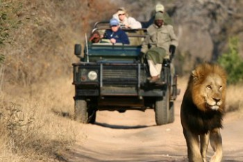 Jewels of South Africa Safari and Tour
