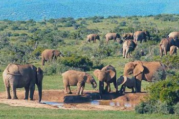 South Africa Deluxe Tour and Wild Safari