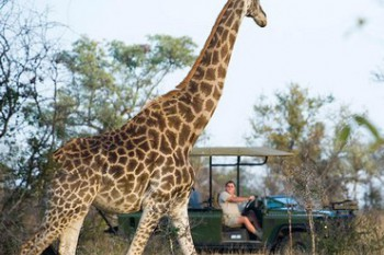 Luxury tour of South Africa - Cape and Kruger tour and safari