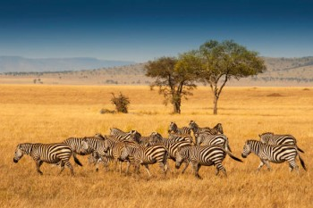 Tanzania classic Safari and Tour